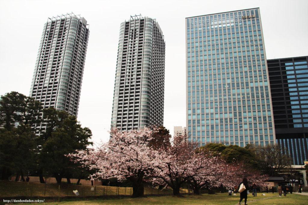 浜離宮恩賜庭園 桜とビル群