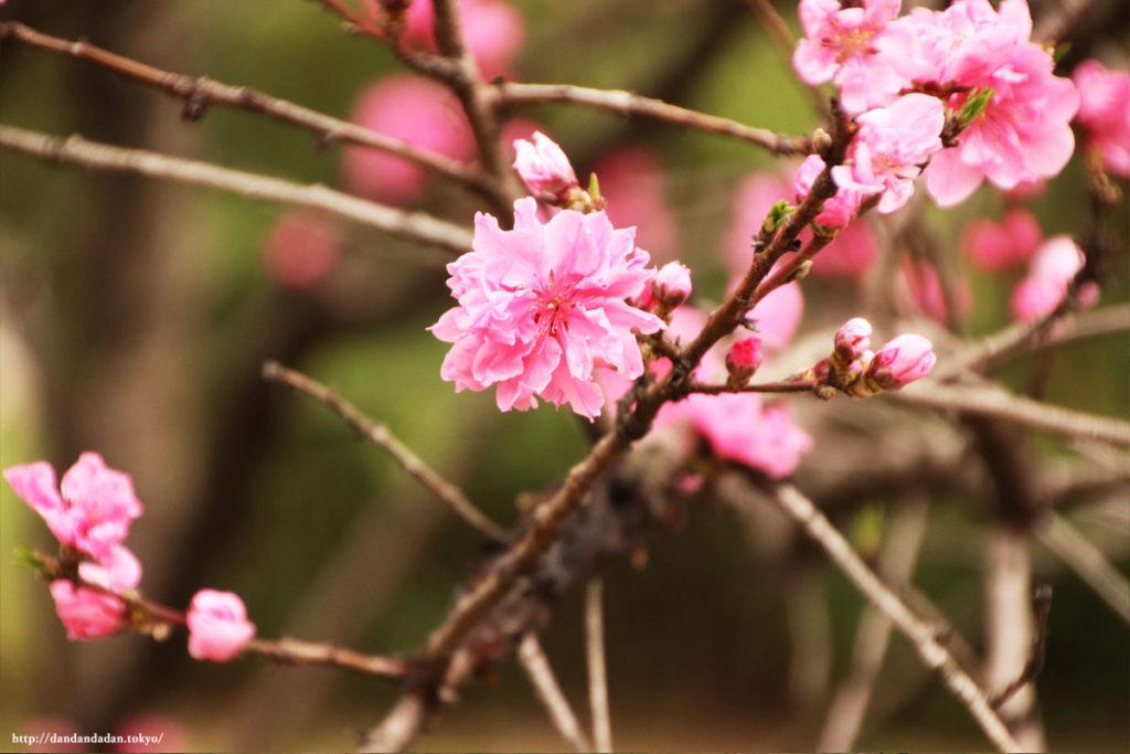 浜離宮恩賜庭園 花