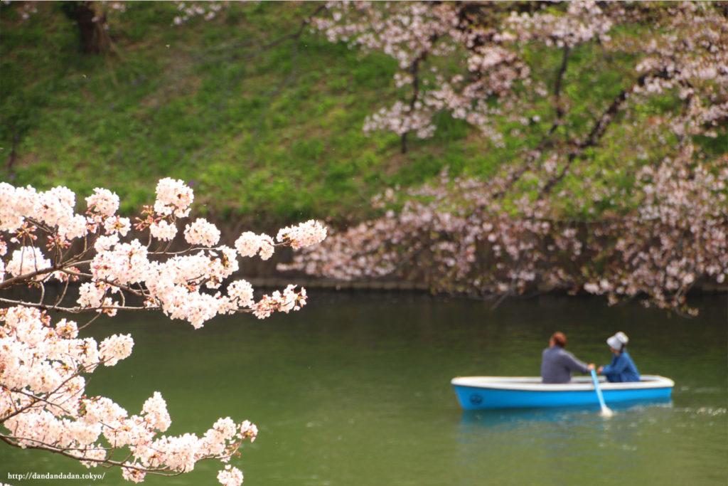 千鳥ヶ淵の桜とボート