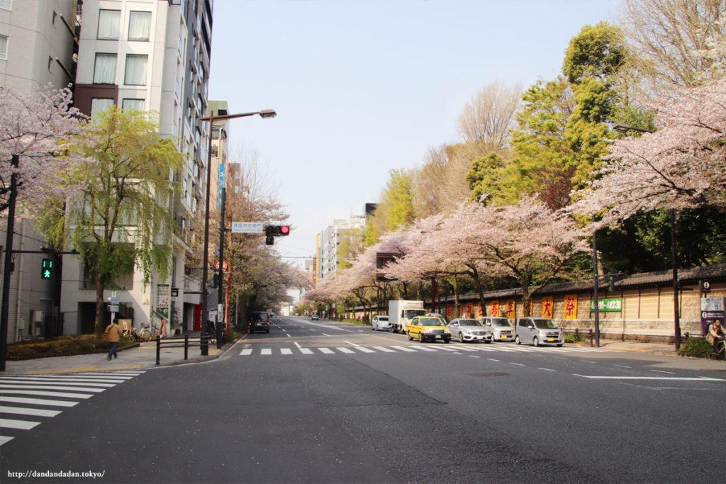 靖国通りの桜