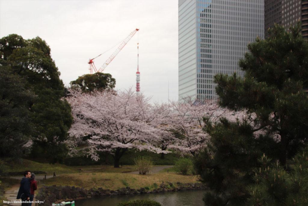旧芝離宮恩賜庭園 桜と東京タワー